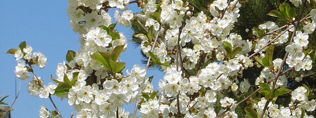 Blumengeschäfte